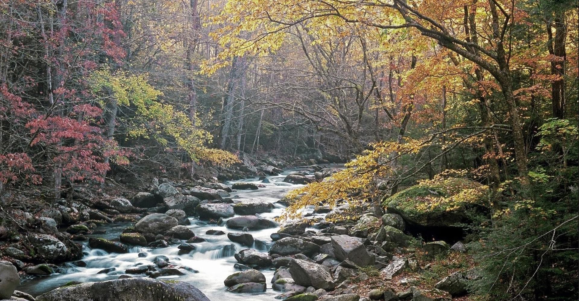 river_forrest2